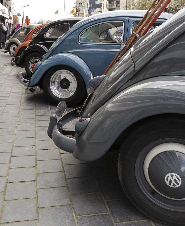 some really amazing beetles lined the streets of Ninove